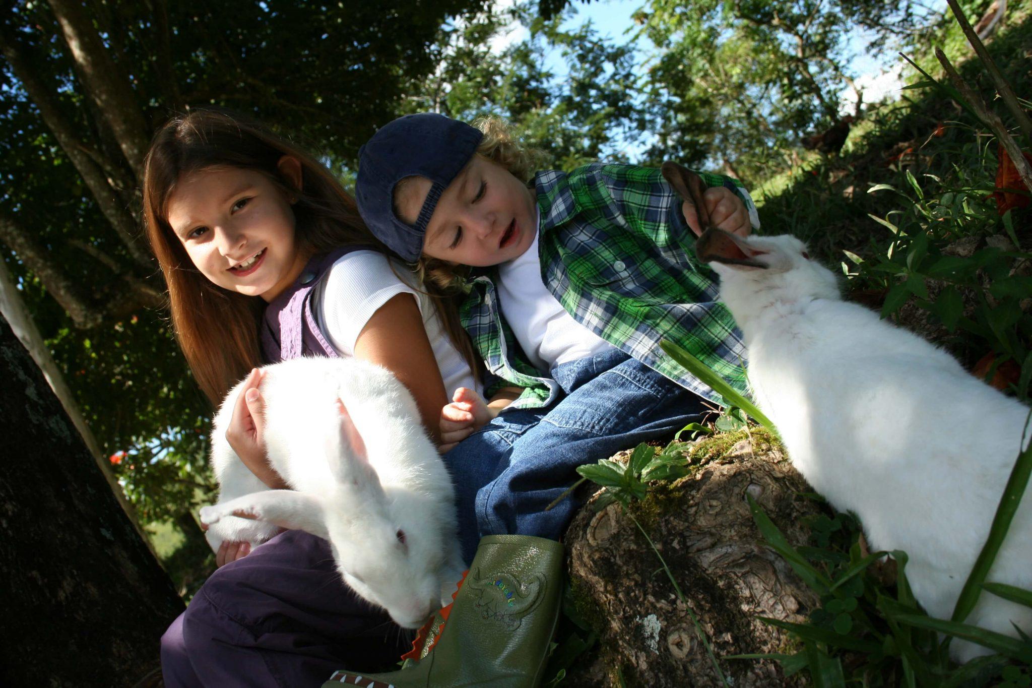 Jardins Para Crianças Terem Contato Com Animais