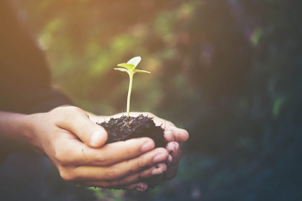 aproveitar a natureza: aprendizado